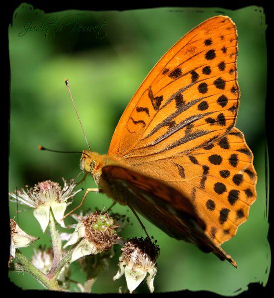 papillon-copie-1.jpg