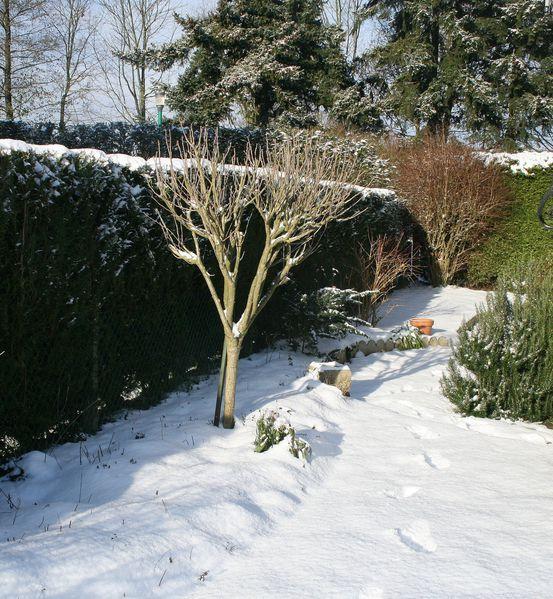 la-nature-et-l-hiver-4481.JPG