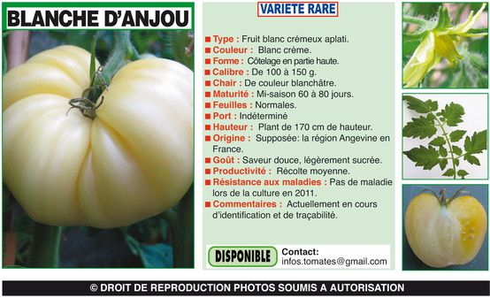 BLANCHED'ANJOU-1