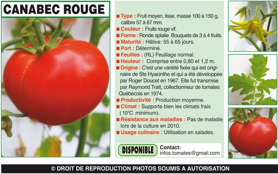 CANABEC ROUGE-1
