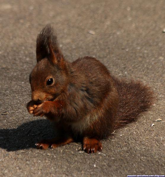 L'écureuil (1)