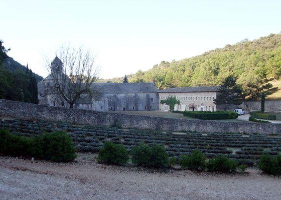 abbaye-Senanque.jpg