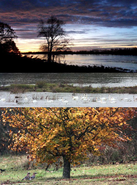 101117 Cygnes d'automne