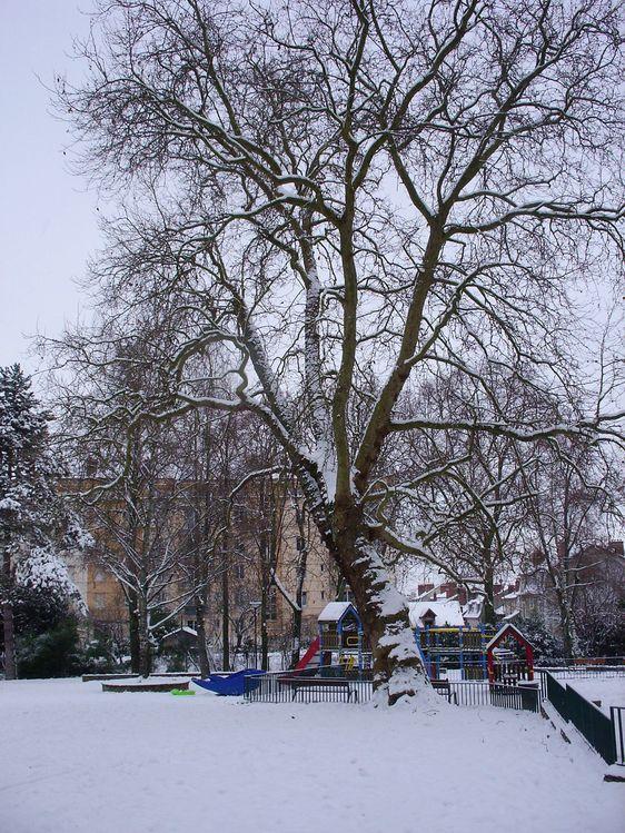 Parc-V.-Thuillat-ski-fond-20-12-09 6429