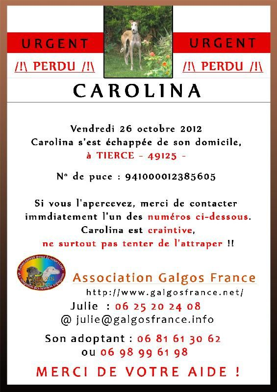 carolina-galgos-france.jpg