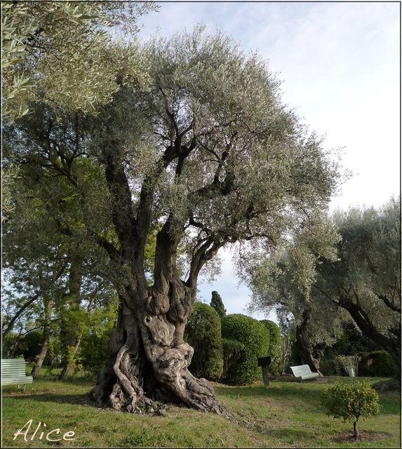 FermeColette-olivier
