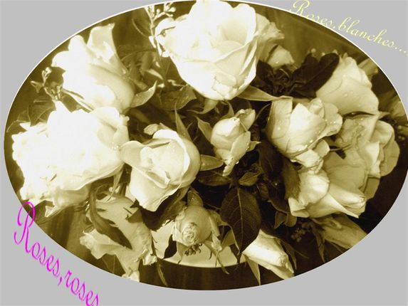 roses (Large)