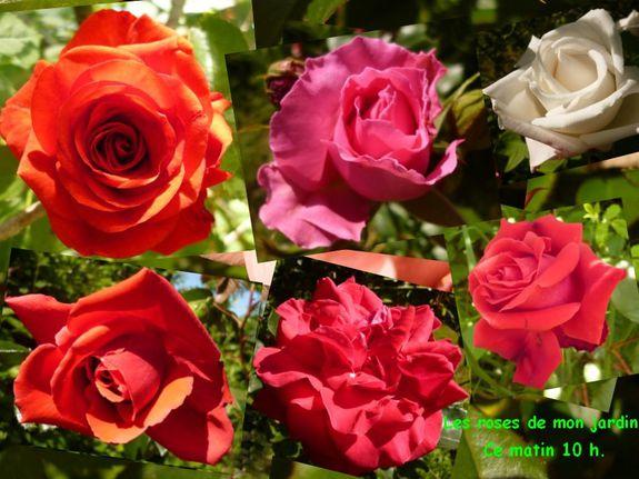 les-roses-de-mon-jardi-Mai-2012.jpg
