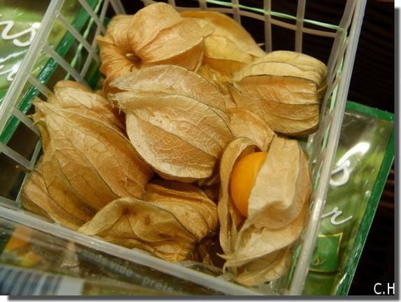 Physalis Comestible