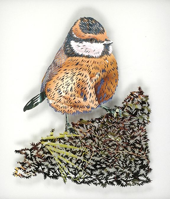 12_tom-gallant-blue-tit-2006-paper-cuts-glass--wood-245-x-2.jpg