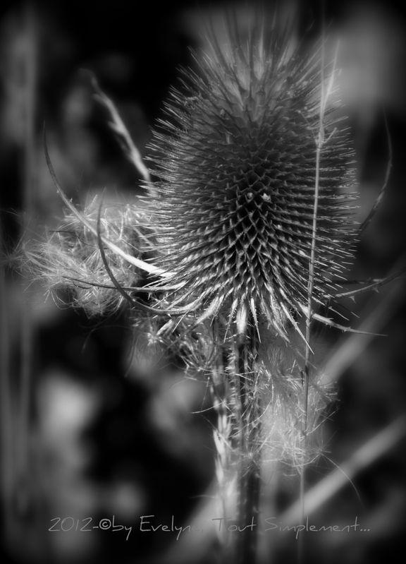 Macro-Fleurs-Plantes-Vegetaux-2-9916.JPG