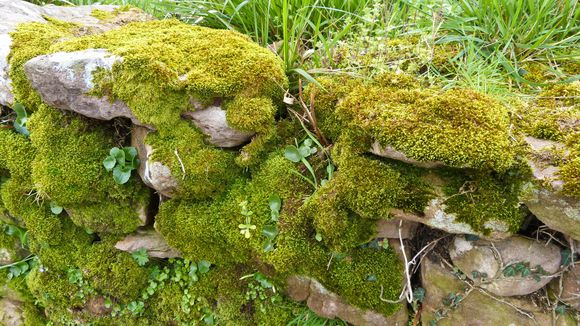 Mousses et lichens 3