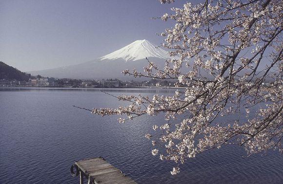 SHISEIDO IBUKI (3)