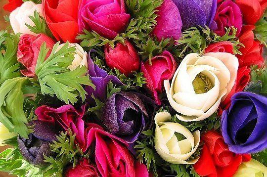 bouquet-d-anemones-233732.jpg