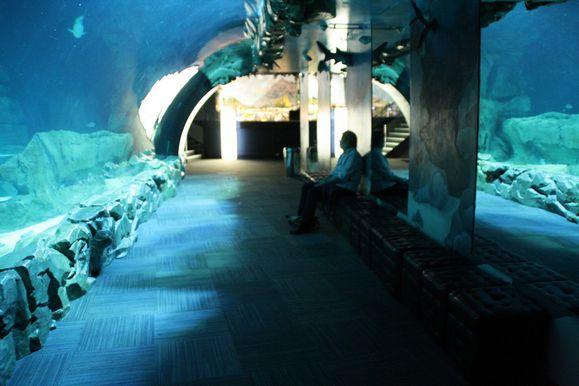 09-Aquarium Trocadéro Paris