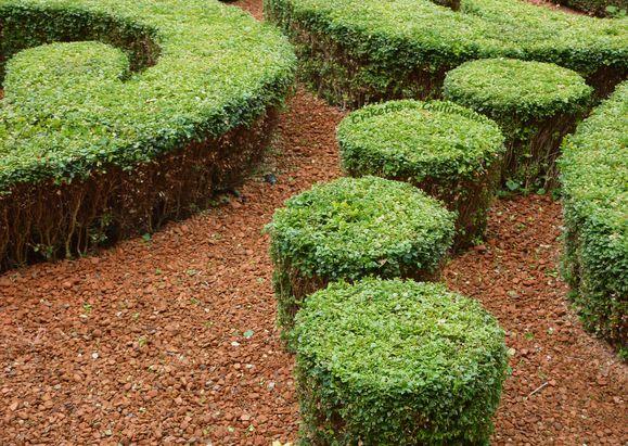 Cercles-de-verdure.jpg