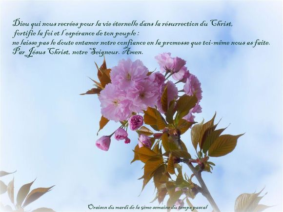 fleurs-arbres-fruitiers-citations.jpg