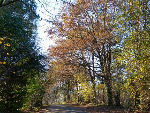 Chemin-a-Arcangues.jpg