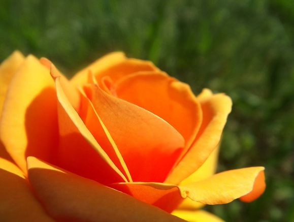 FMS-PHOTO-A-DAY-SOMETHING-ORANGE.JPG