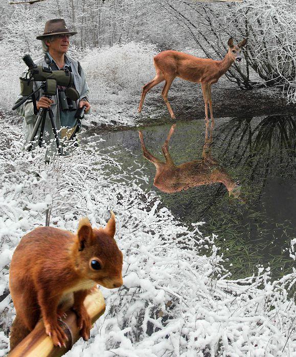 Castorvoeux 2013 Jim ecureuil chevrette