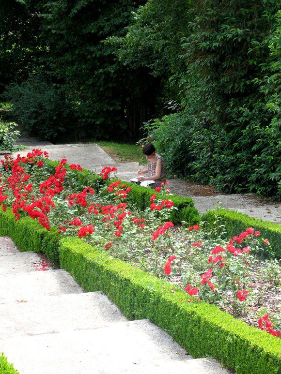une illustratrice parmi les roses pour le blog