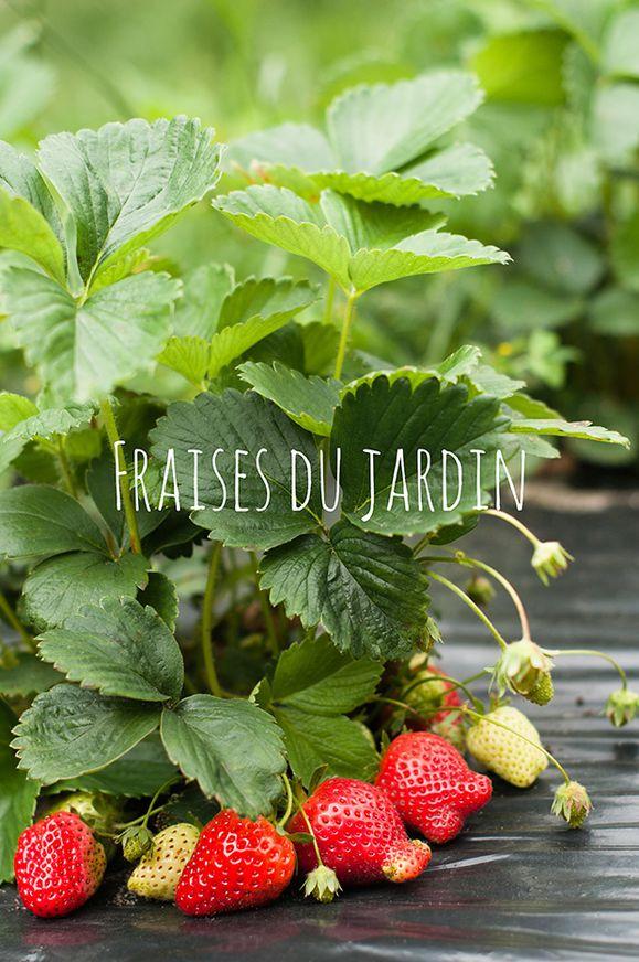 Fraisier_la_cuisine_de_nathalie.jpg