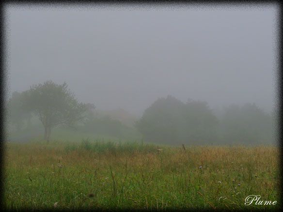 brouillard3.jpg
