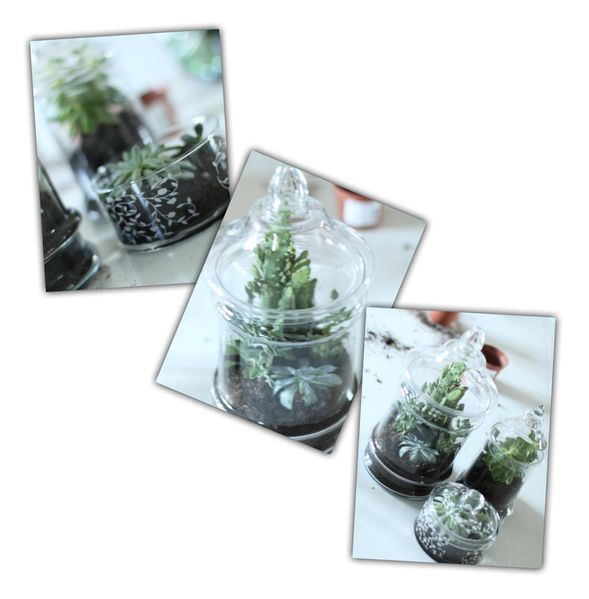 cr er 14 un terrarium avec ses 10 ptits doigts. Black Bedroom Furniture Sets. Home Design Ideas