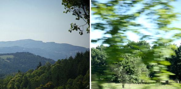 vert-montagne-flou.jpeg