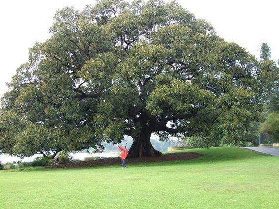 Sydney le blog de vince for Jardin botanique 78