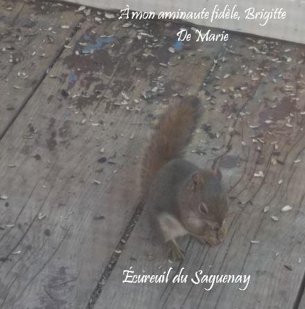 ecureuil-saguenay.jpg