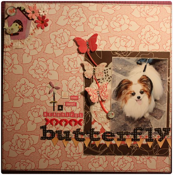 386 A funny sweet & beautiful butterfly