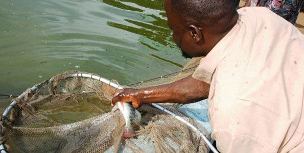 Kenya-Lugari-Fish-Farmers-project-Nov-10.jpg