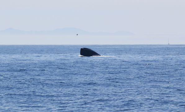 baleines 2802 new