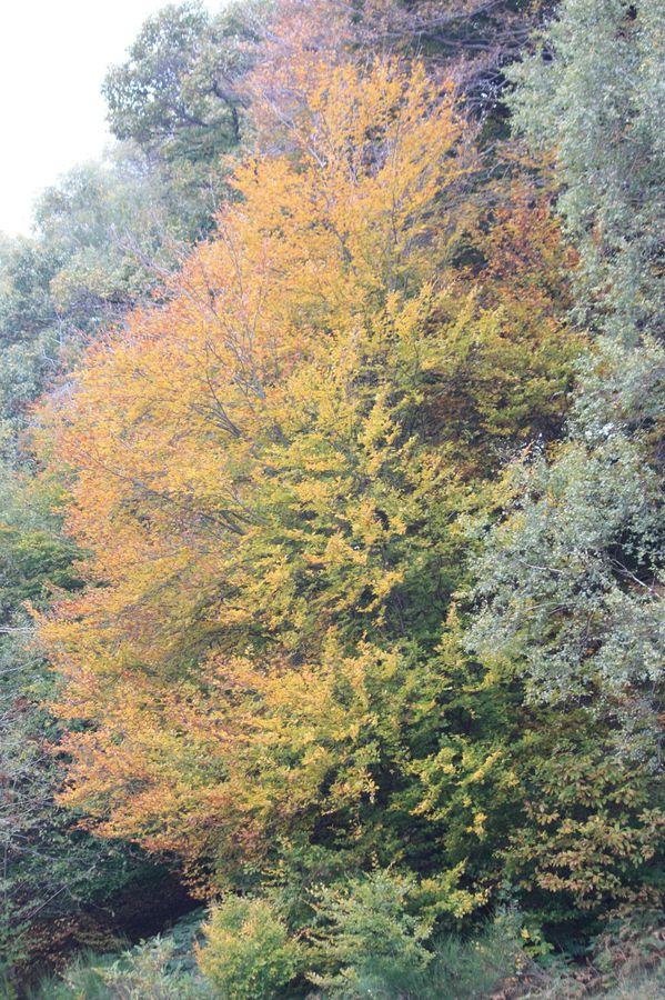 2010.10.23-Camorino-Ponte-Capriasca 7909