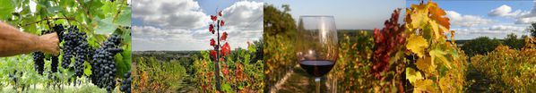 compo-vigne-vin-31-12-12.jpg
