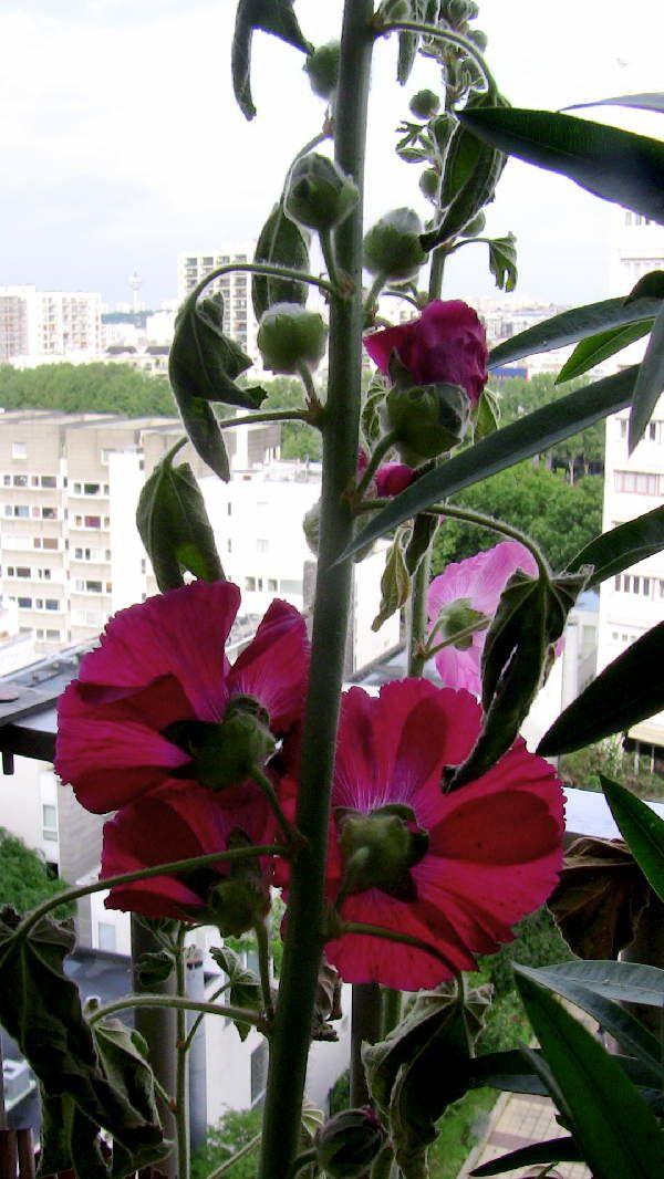 roses011