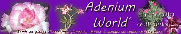 banniere adenium world forum