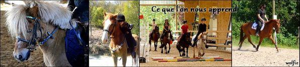 diapo-relation-que-l-on-nous-apprend-avec-les-chevaux-2.jpg