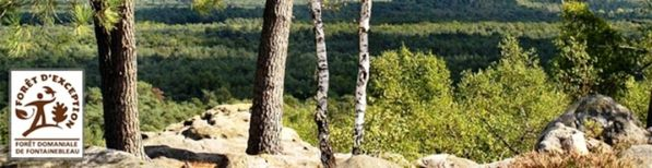 Fontainebleau foret