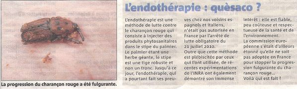 endotherapie