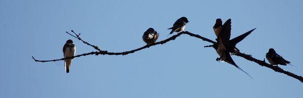 oiseaux 0854