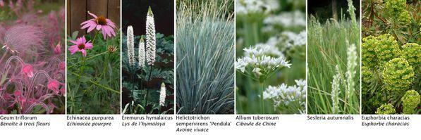 ADH-bande-de-plantes.jpg