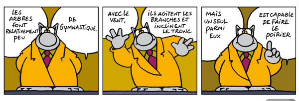 Le-chat20122.png