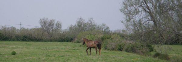 2010 09 11 Fillon cheval vieux