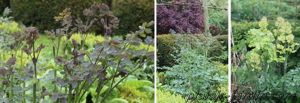 Visite-jardin-Sylvie-24.jpg