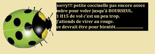 coccinelle-2.png
