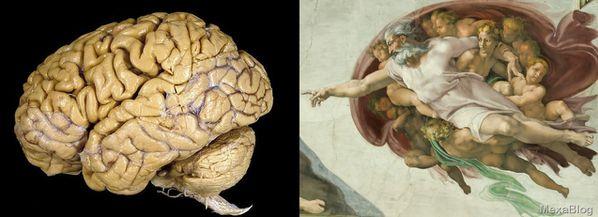 cerebro capilla sixtina