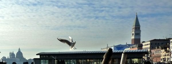 mouette-seagull-campanile-venise.JPG
