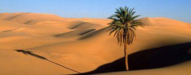 Desert_392-copie-1.jpg